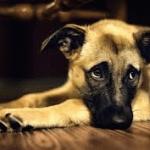 Cute-Dog-150x150