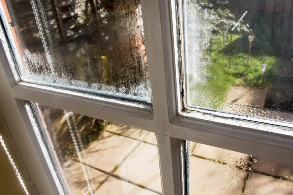 Moisture Leads to Mold and Mildew on Window
